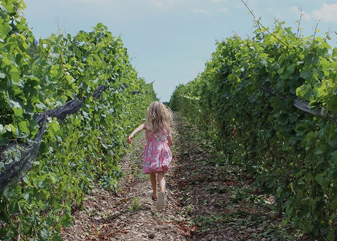 Discovering the wineries of Ontario: Prince Edward County