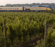 Train with a winery landscape