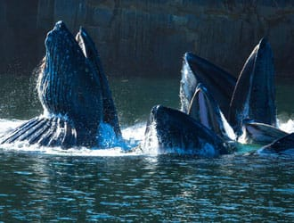 Whale Watching with Prince Rupert Adventure Tours